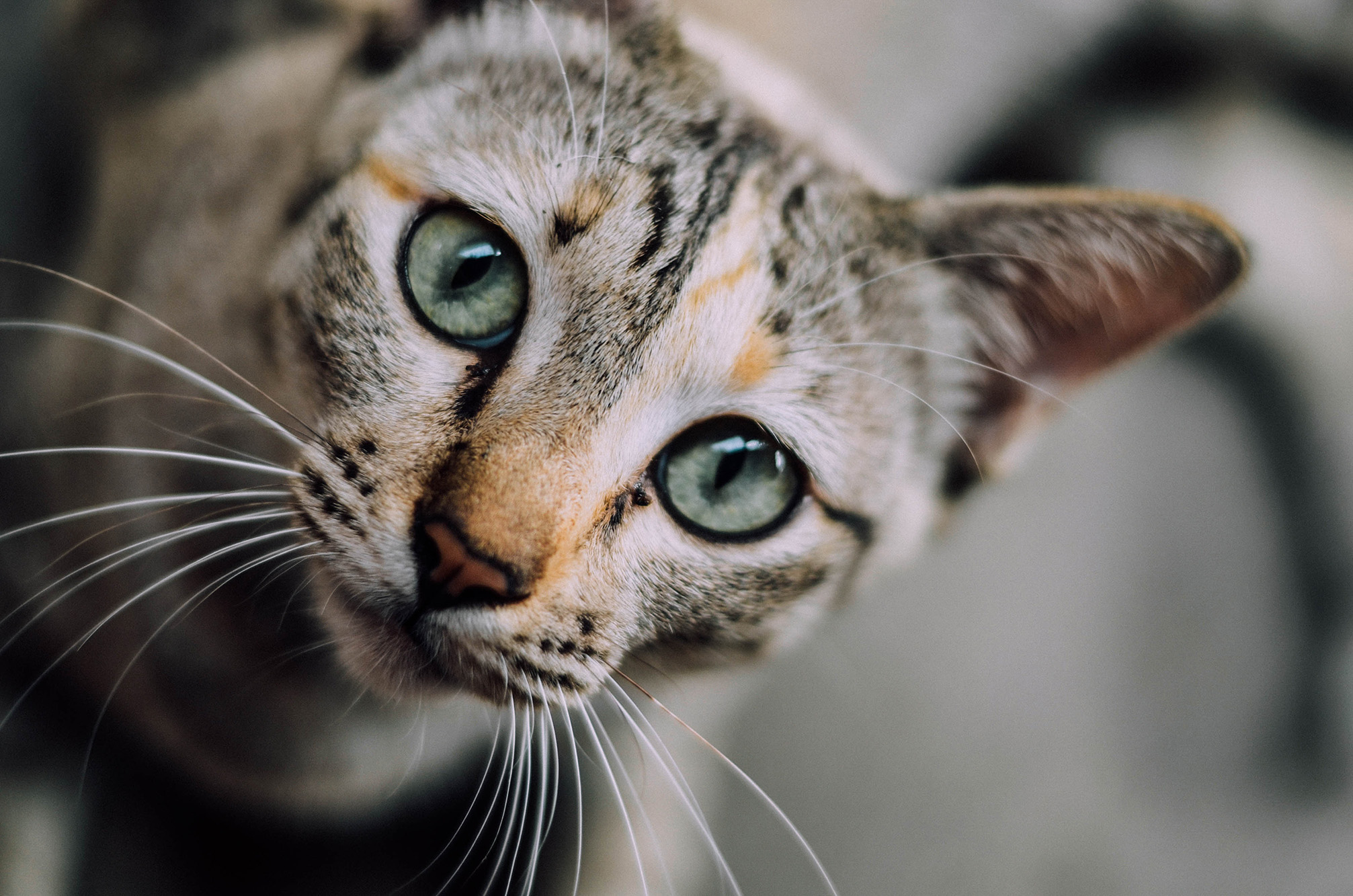 6 ways to commemorate your pet