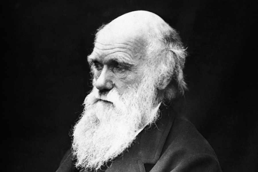 darwin awards