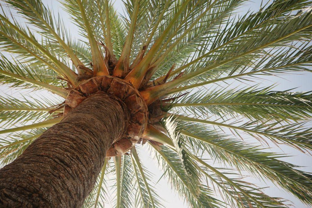 palm-tree-406995_1920