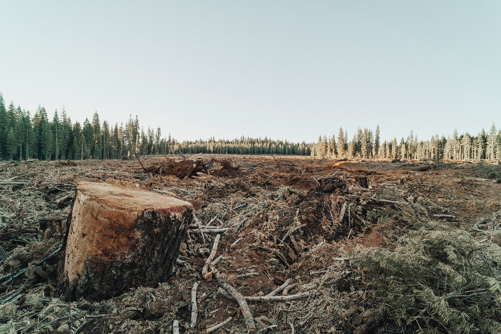 Ecological Grief: Mourning the Loss of Our Planet