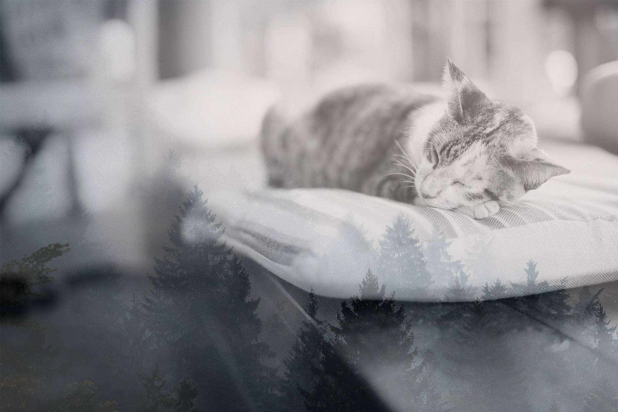 How to Care for a Deceased Pet at Home